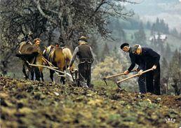 Métier Agriculture Labours (labour Labourage Cheval Chevaux Horse Horses Paysans)  Photo GETTLIFFE*PRIX FIXE - Agricultura
