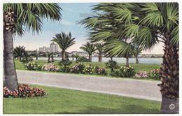 Corpus Christi TX, Ocean Drive Scene C1940s Vintage Unused Texas Postcard M8536 - Corpus Christi