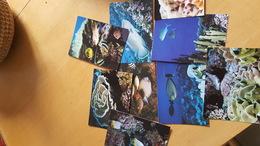 Lot De  9 Cartes Postales Neuves Années 70 Poissons Et Coraux De Tahiti Très Bon état Dos Partagé - Polynésie Française
