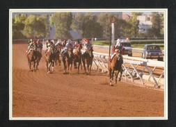 Saudi Arabia Picture Postcard Horse Race View Card - Saudi Arabia