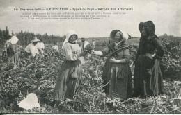 N°55848 -île D'Oléron -récolte Des Artichauts- - Cultures