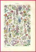 Fleurs. Fleur. Recto. Langage Des Fleurs. Verso. Larousse 1907. - Zonder Classificatie
