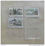 25 Inlegbladen Voor Chromo's Liebig - Vieux Papiers