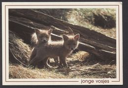 Prachtige Jonge Vosjes / Beautiful Young Foxes  - NOT USED -  See The 2  Scans For Condition. ( Originalscan !!! ) - Animaux & Faune