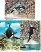 ORLANDO Florida Sea World Killer Whale SHAMU 3 Cards - Orlando