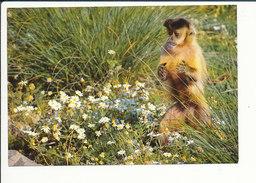TBE - Jardin Zoologique Des Sables D'Olonne (zoo) Singe Capucin Animal Collection Louis Gay CP68/43 - Monkeys