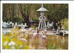 TBE - Jardin Zoologique Des Sables D'Olonne (zoo) Flamants Roses Oiseau CP68/43 - Uccelli