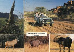 Namibia - Waterberg Plateau Park - Namibie