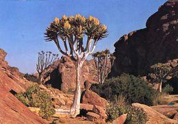 Namibia - Scenic View - Namibie