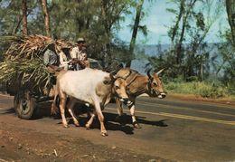 Réunion - Folklore - Reunion