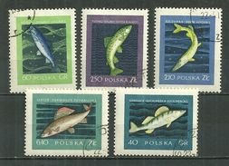 POLAND Oblitéré 928-932 Poisson Poissons Sandre Saumon Brochet Truite Ombre Fisch - Oblitérés