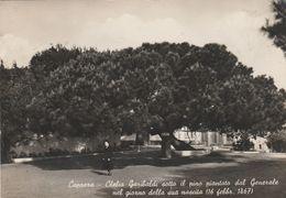 13364) SASSARI CAPRERA CLELIA SOTTO IL PINO PIANTATO DA GARIBALDI NEL 1867 - Sassari