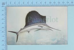 """Poisson Fish - Sail Fish """" Greatest Sport Fish In Florida - Postcard Carte Postale - Non Classificati"""