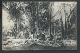 +++ CPA - Asie - Sri Lanka - Ceylon Ceylan - COLOMBO - Banian Dans Le Jardin De Peradenïye   // - Sri Lanka (Ceylon)