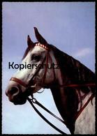 ÄLTERE POSTKARTE Pferd Schimmel Grey Horse Cheval AK Cpa Postcard Ansichtskarte - Pferde