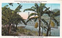 Panama Banana Plantation On Banks Of Panama Canal With Battleshi