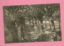 C.P. De Panne  =  Route  D' Adinkerke  :  Petit  Bois - De Panne