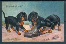 19026 3 Jeunes Teckel (Dachshund) Jouant Avec Une Pantoufle (Was Steckt Da Drin ?) - Chiens