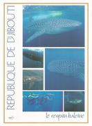 DJIBOUTI. Le Requin Baleine De La Mer Rouge,  Le Plus Grand Poisson Vivant Sur Terre, Carte Postale Format 20 X 14 Cm - Dauphins