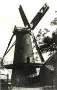 ZWEVEZELE - Wingene (W.Vl.) - Molen/moulin - De Verdwenen Meiboommolen In Mei 1945, Nog Volop In Bedrijf - Wingene