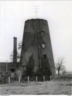 BUGGENHOUT (O.Vl.) - Molen/moulin - Historische Opname Van De Romp Van De Weiveldmolen In 1981; Prentkaart 10x14 Cm - Buggenhout