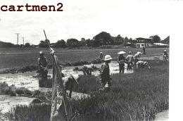 3 PHOTOGRAPHIE ANCIENNE : SIAM THAILANDE BANGKOK THAÏLAND RIZIERE AGRICULTURE RICE FIELD - Thaïlande