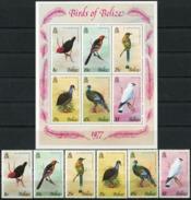 BELIZE 1977 Birds, Turkey, Fauna MNH - Belize (1973-...)