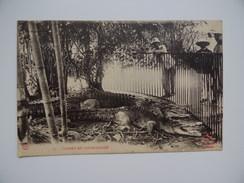 VIÊT-NAM SAÏGON Caïman De COCHINCHINE INDOCHINE Crocodile Carte Non écrite - Viêt-Nam