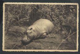 +++ CPA - Afrique - RUANDA - RWANDA - Hippopotame - Nels // - Rwanda