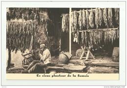 Rochehaut - Frahan / Sur Semois   *   Le Vieux Planteur De La Semois  (Tabac- Tabak) - Bouillon