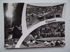 15 THIEZAC Thiézac Troupeau De Vache Mouton Bergerie Alpage - France