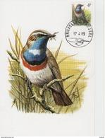 MC BUZIN /gorgebleue à Miroir Blanc/witgetsernde Blauwborst/cyanosylvia Sv. Svecica/bluethroat/ Blaukehlchen   1989 - Sperlingsvögel & Singvögel