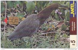 Nº 70 TARJETA DE URUGUAY DE ANTEL DE UNA GARZA COLORADA (PAJARO-BIRD) - Uruguay