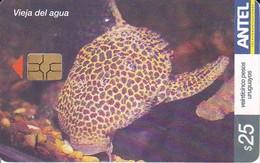 Nº 408 TARJETA DE URUGUAY DE UN PEZ  VIEJA DEL AGUA (PEZ-FISH) - Uruguay