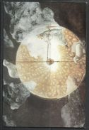 ITALIA ITALY CASTELFIORENTINO 1 2 1998 MARCO ULIVIERI SFIAT LUX CARTOLINA POST CARD ANNULLO SPECIALE - Pittura & Quadri