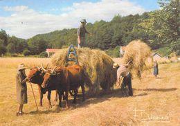 """Agriculture > Récolte Des Foins """"Voici La Dure Loi Des Champs"""" (boeufs Paysans Métier)  Photo Francis DEBAISIEUX 20 - Culturas"""
