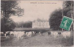Nièvre : ENTRAINS : Le  Château ,  Vache Au  Paturage - Autres Communes