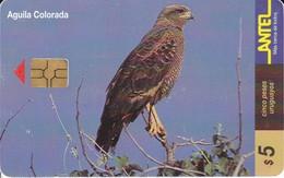Nº 109 TARJETA DE URUGUAY DE UN AGUILA COLORADA (BIRD-EAGLE)  (CHIP G4 NEGRO) - Uruguay