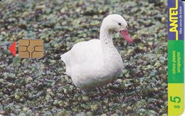 Nº 72 TARJETA DE URUGUAY DE ANTEL DE UNA COSCOROBA (PAJARO-BIRD)  (CHIP G5 ROJO) - Uruguay
