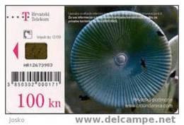 ACETABULARIA ACETABULUM - 100. Kuna ( Croatie Rare Card - High Value  ) Marine Life Undersea Underwater Sea Fish Poisson - Croatie