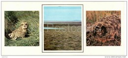 Short-eared Owl , Asio Flammeus - Birds - 1986 - Russia USSR - Unused - Oiseaux