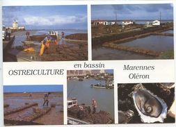 Ostréiculture En Bassin Marennes Oléron : Captage Détroquage éparage élevage Affinage En Claires (cp Vierge) - Visvangst