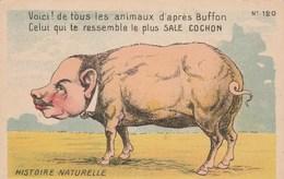 Humour Satirique Histoire Naturelle Voici De Tous Les Animaux D'après BUFFON Celui Qui Te Ressemble Le Plus SALE COCHON - Cerdos