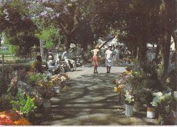 AFRIQUE ZIMBABWE Flower Sellers Bulawayo (fleurs)  (Photo David TRICKETT B/27)*PRIX FIXE - Zimbabwe