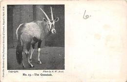 No. 13 - The Gemsbok, Fauna, Photo By F.W. Bond - Animals