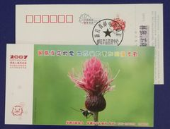 Insect Asian Longhorned Beetle,CN 07 Caohu Voluntary Blood Donation Office Advert Pre-stamped Card,specimen Overprinted - Other