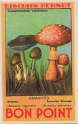 Chromo Champignon Mushroom 8 X 5 Texte Explicatif Au Dos Bon Point PERNOT - Trade Cards