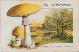 Chromo Champignon Mushroom 10,5 X 7 Texte Explicatif Au Dos - Trade Cards
