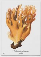 Chromo Champignon Mushroom 10,5 X 14,5 Texte Explicatif Au Dos Publicité SARPAREL Servier Orléans - Trade Cards