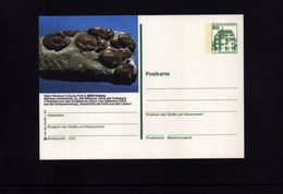 Deutschland / Germany  Fossilien / Fossils Postcard - Fossiles
